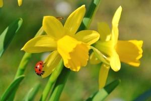 Hyvää pääsiäistä! Hyviä kelejä luvassa 😃😎 Olemme suljettuina 19-22.4. Sillä välin kannattaa tutustua vaikka vaihtoautovalikoimaamme osoitteessa www.maakunnanauto.fi 😉